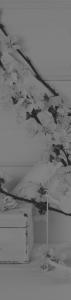photographie-fond-menu-photographes-versailles-coffret-cadeau-offres-experience-basics-studio-gehin