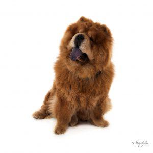 portrait-famille-animal-de-compagnie-chien-studio-gehin