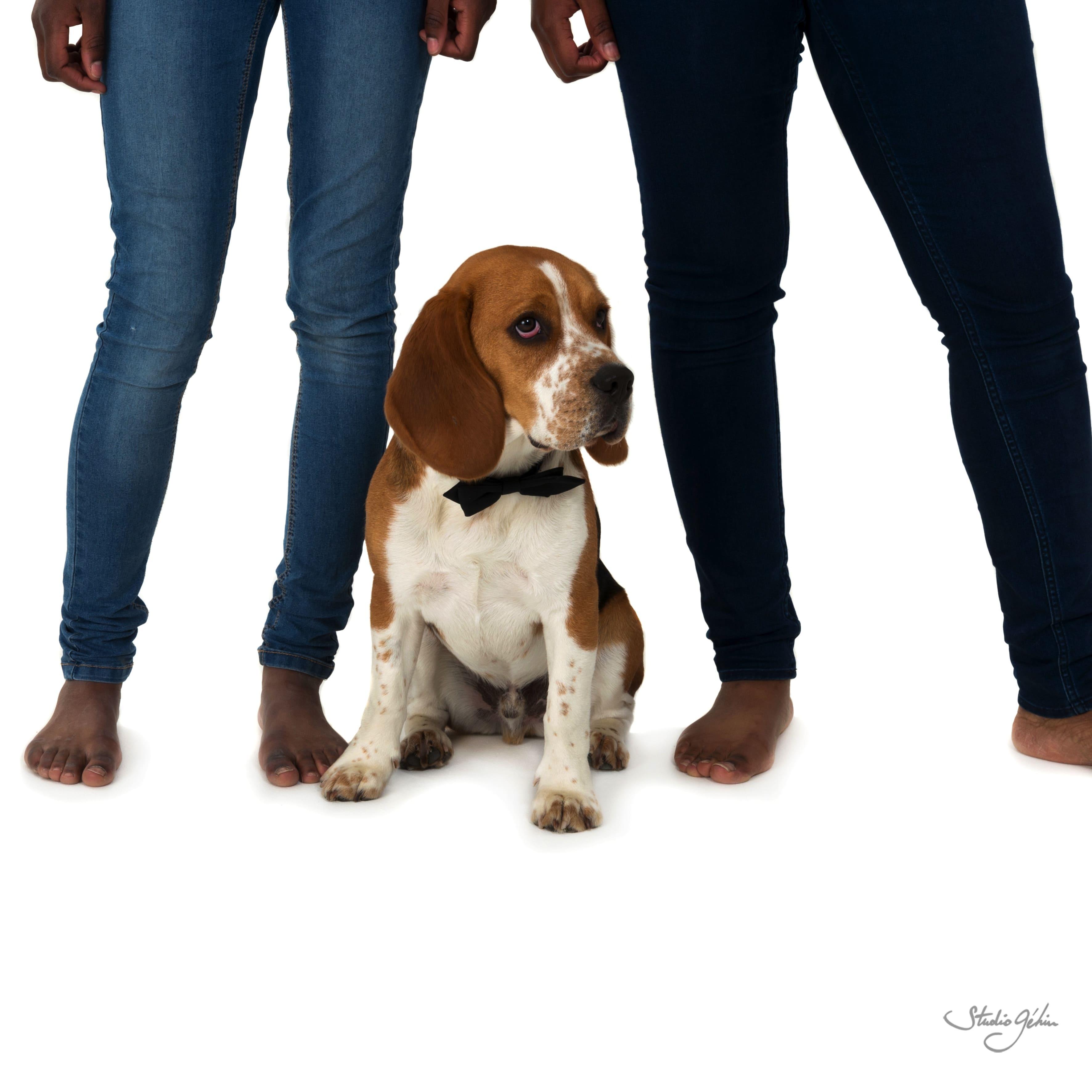 portrait-famille-chien-studio-gehin